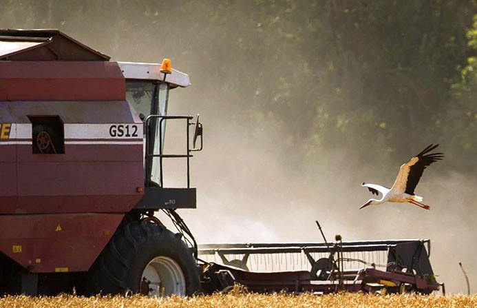 Уборочная-2021: аграрии собрали уже 1,5 млн  тонн зерновых