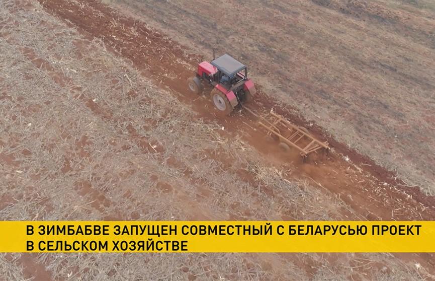 Беларусь и Зимбабве запустили новый проект в сельском хозяйстве