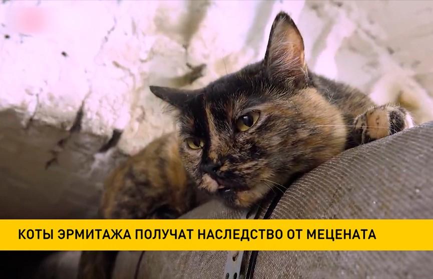 Коты Эрмитажа получат наследство от мецената