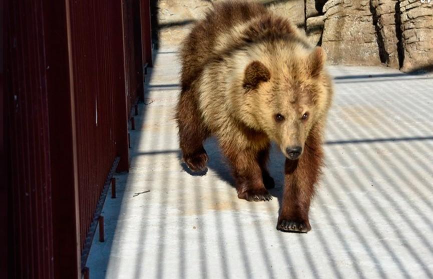 В Минском зоопарке появилась молодая медведица