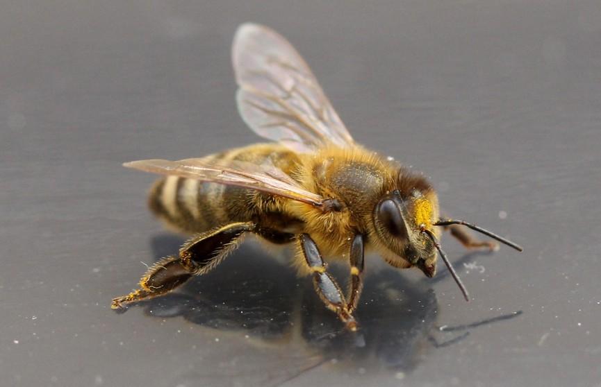 Мужчина на 10 минут отошел в магазин. За это время его машину захватили пчелы (ВИДЕО)