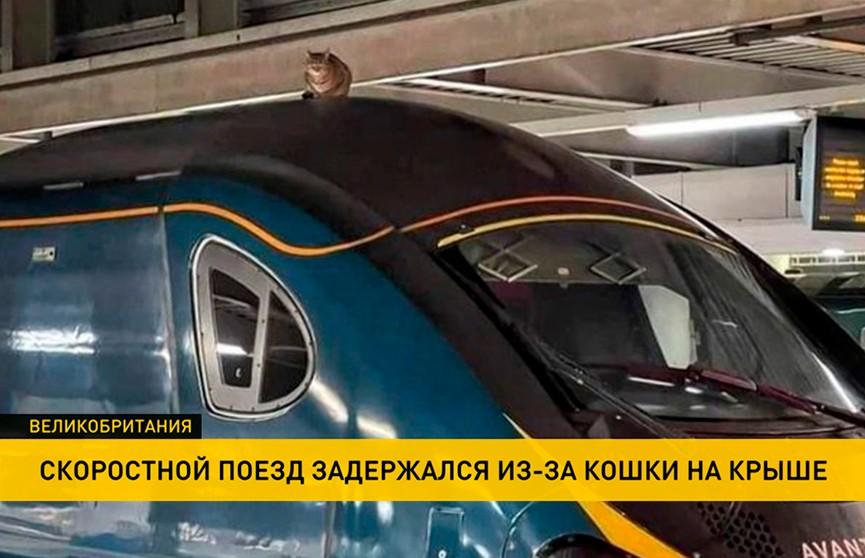 Скоростной поезд задержался из-за усевшейся на кабину машиниста кошки