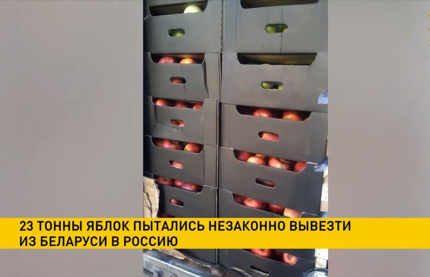 23 тонны яблок пытались незаконно вывезти из Беларуси в Россию