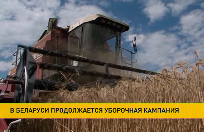 Александр Лукашенко выехал в поля Минского района, чтобы посмотреть, как идёт уборочная кампания