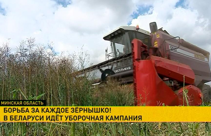 Как идёт подготовка к уборочной в агрогородке Крупица?