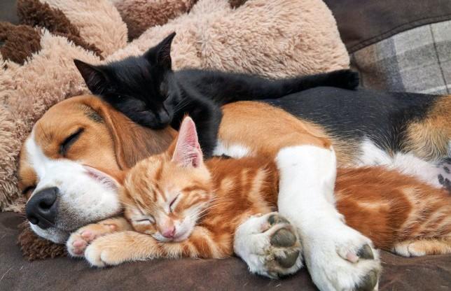 Трогательное видео: собака выкормила двух котят и стала для них приемной мамой