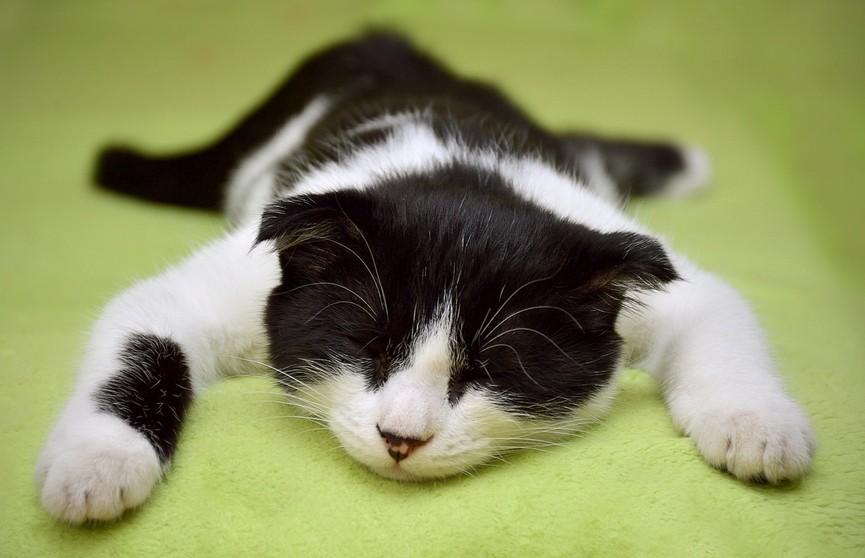 Кот, отдыхающий как человек, заставил хохотать пользователей Сети! (ВИДЕО)