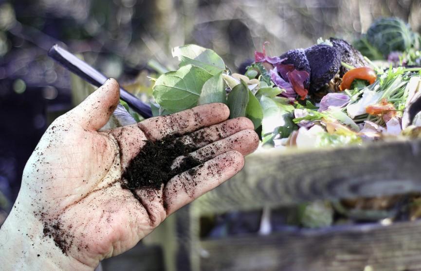 Серьезная опасность: какие химикаты нельзя использовать в огороде