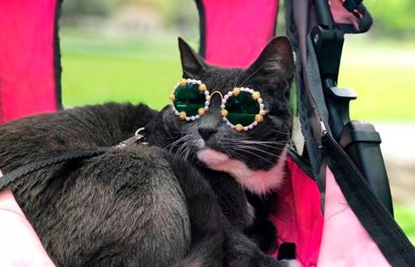 Хозяйка устроила для кошки показ мод. Это очень смешно