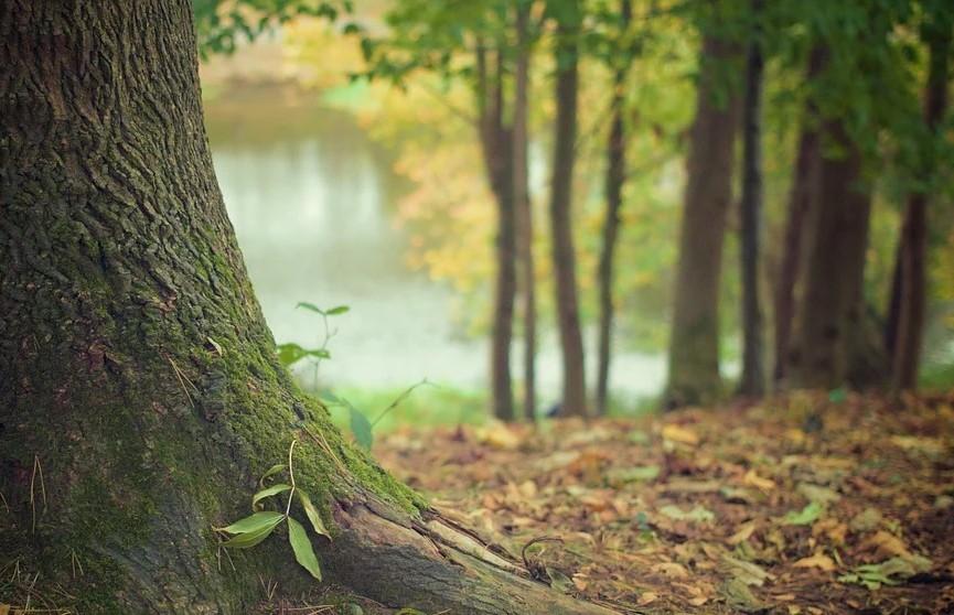 Общее дело белорусов: в Беларуси проходит неделя леса