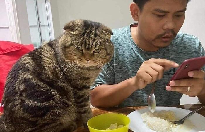 Самый ревнивый кот: животное ревнует хозяина к жене