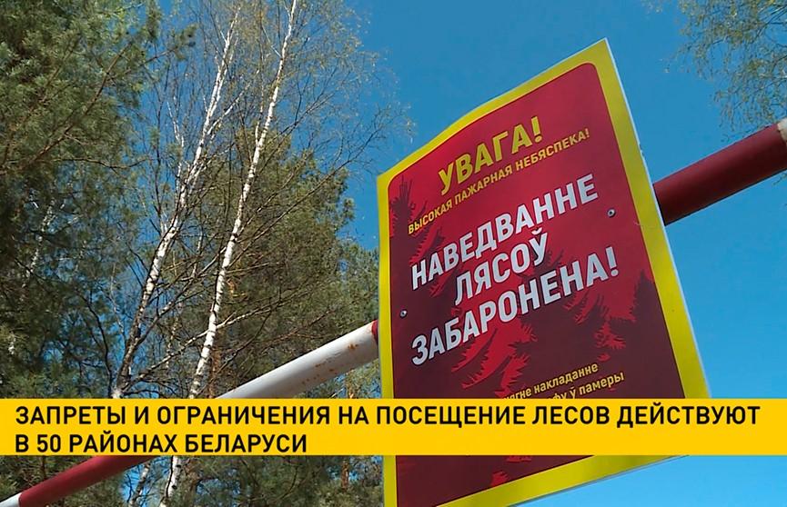 Запреты и ограничения на посещение лесов введены в 50 районах Беларуси