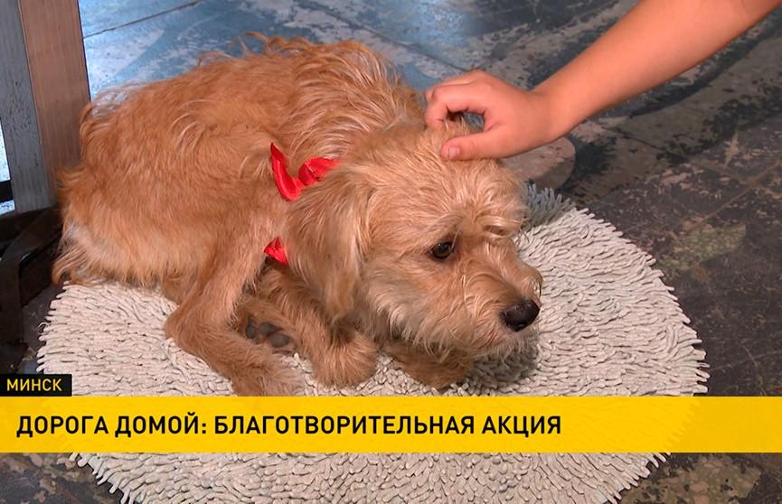 Благотворительная акция в честь Всемирного дня защиты бездомных животных: обрести пушистого друга может каждый