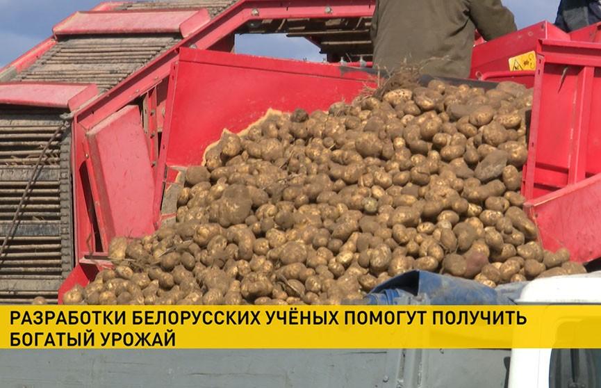 Белорусские аграрии на старте посевной