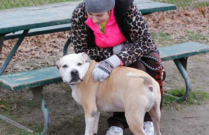Пес воссоединился с хозяйкой через восемь лет после пропажи