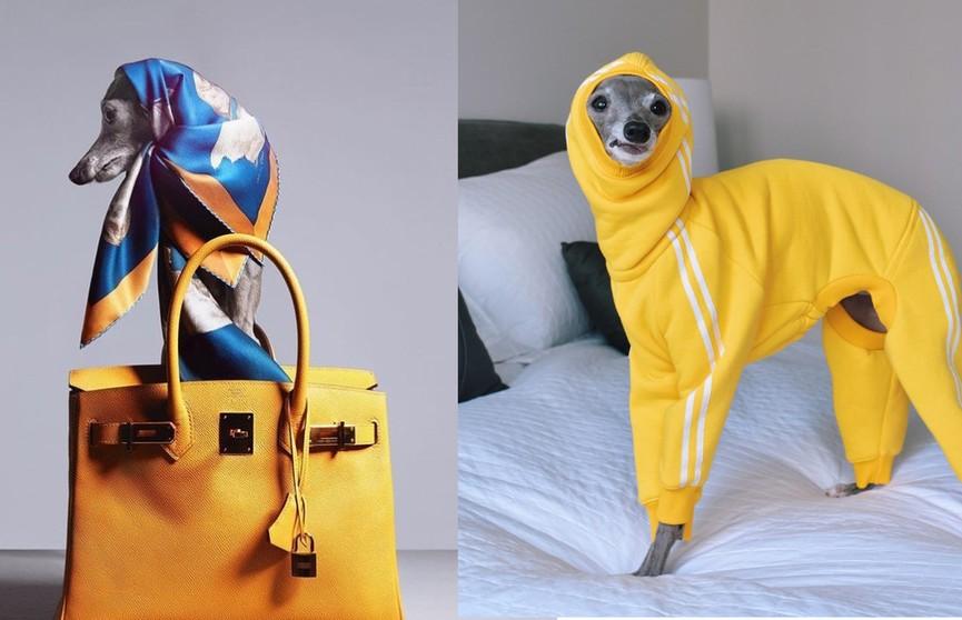 На обложке модного журнала появилась собака. И её гардеробу действительно можно позавидовать