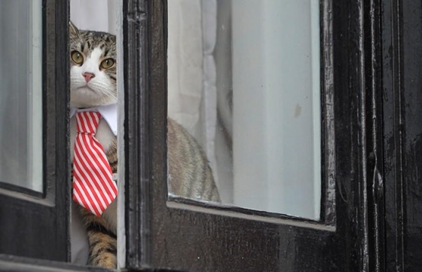 Джулиан Ассанж отказался от своего кота