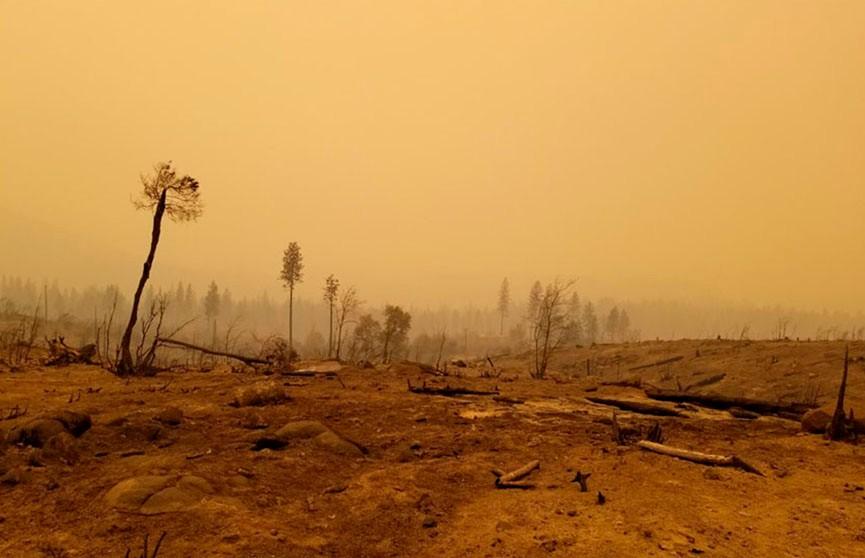Калифорния объявлена зоной стихийного бедствия из-за пожаров: число погибших выросло до 44