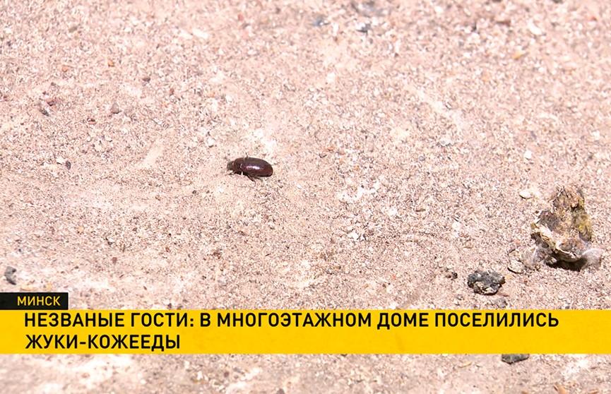 Кошмар на улице Бакинской: жуки-кожееды терроризируют жителей минской девятиэтажки