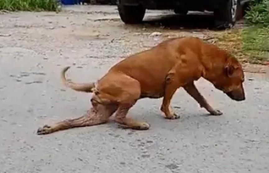 Собака придумала хитрый способ просить еду и прославилась в Сети (ВИДЕО)