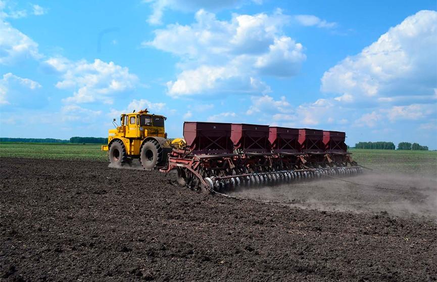 Мобильное приложение для аграриев и новые сорта картофеля: как проходит посевная в Гродненской области?