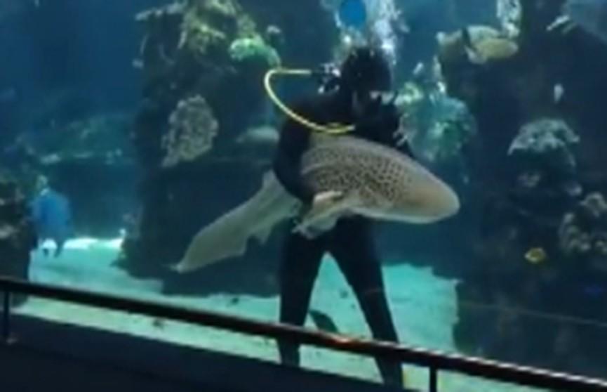 Акула «попросила» дайвера погладить её