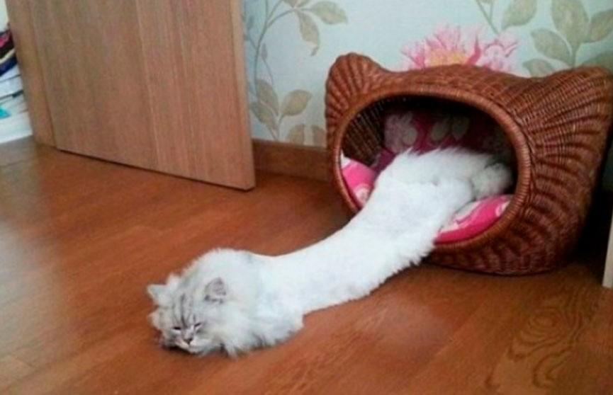 Смех до слёз! Коты, которые точно умеют привлекать внимание!