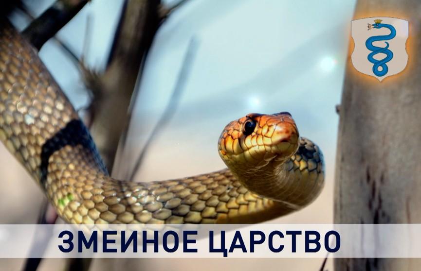 Контуры. Змеиное царство