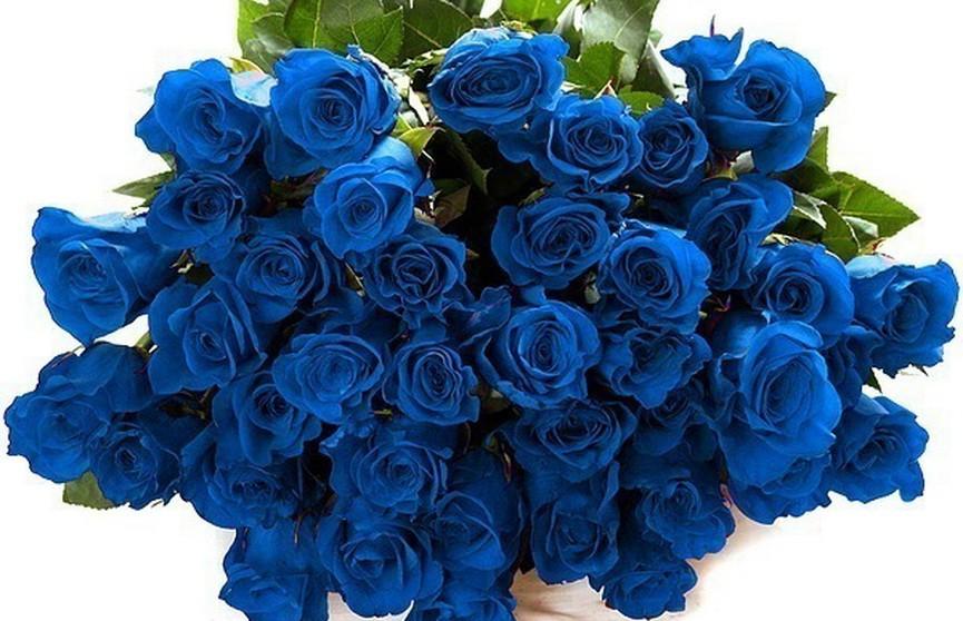 Генетики из Китая создали синие розы
