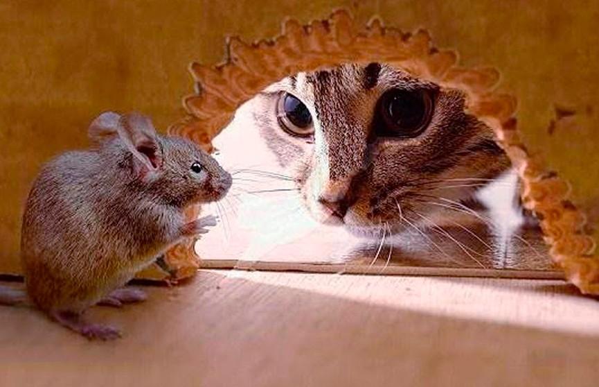 Хитрая мышь обвела вокруг пальца кота и рассмешила соцсети