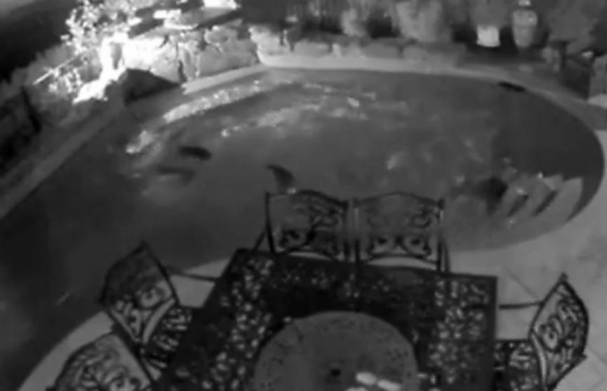 Еноты устроили ночную вечеринку в чужом бассейне в США