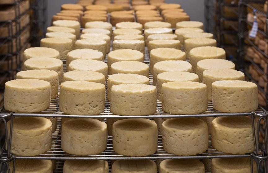 Работники фабрики на Кубе украли почти полторы тонны сыра