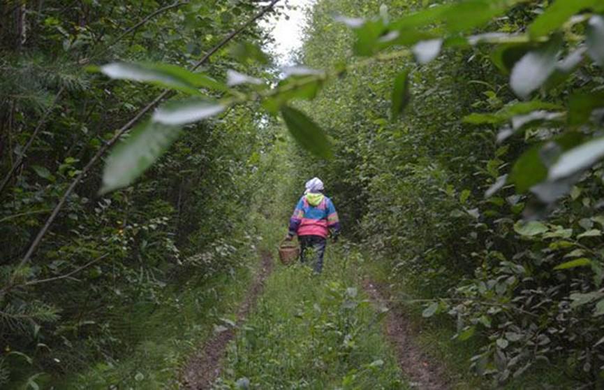 Пенсионерка заблудилась в лесу Быховского района и вызвала МЧС