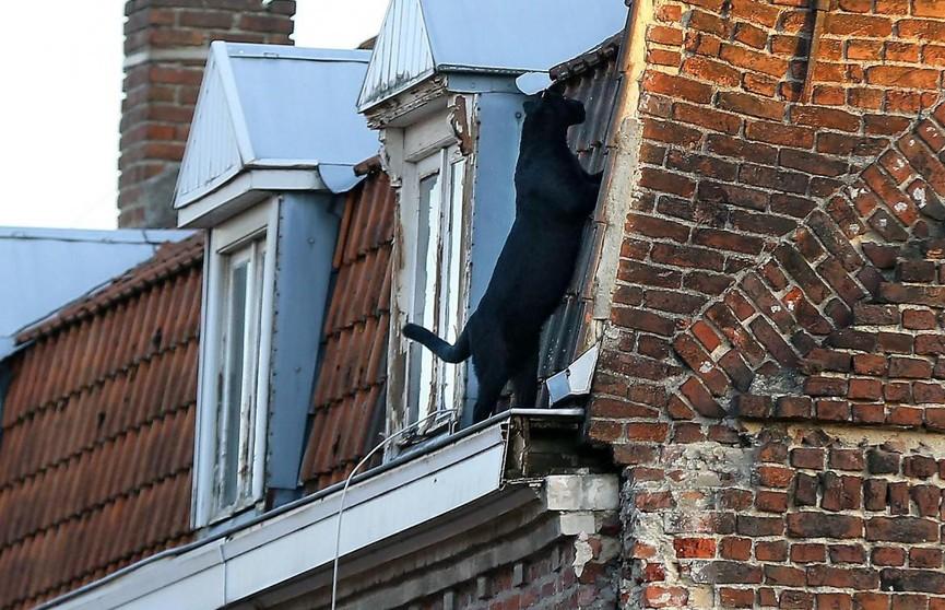 Во французском городке по крышам разгуливала пантера