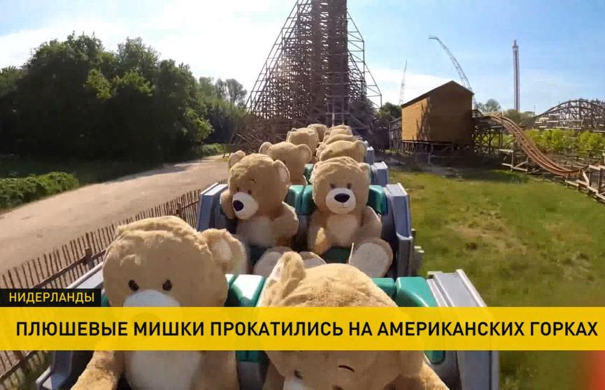 Плюшевые медведи в Нидерландах прокатились на американских горках (ВИДЕО)