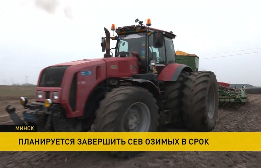 В Беларуси посеять озимые намерены до 1 октября
