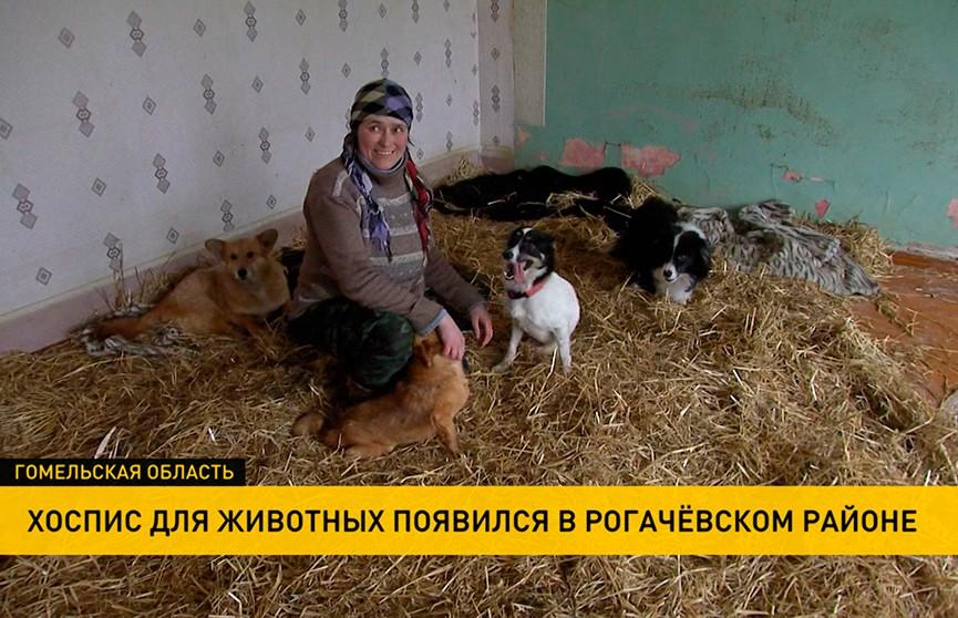 «Для многих это единственный шанс на жизнь»: жительница Рогачёвского района создала хоспис для животных
