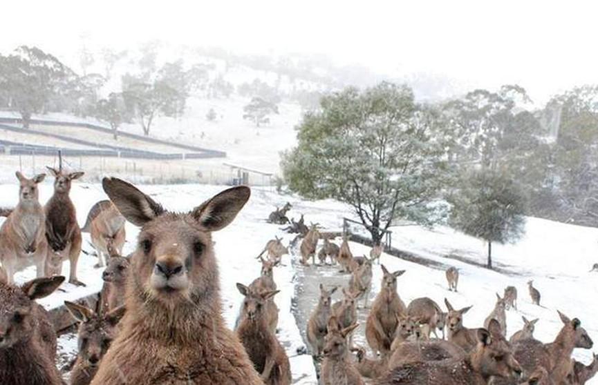 На юге Австралии впервые за 4 года выпал снег