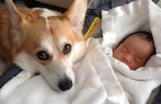 Собака спасла жизнь младенцу, зарытому в земле матерью-подростком