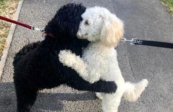 Две собаки, разлученные в детстве, случайно встретились и стали обниматься. Почитайте, это слишком мило!