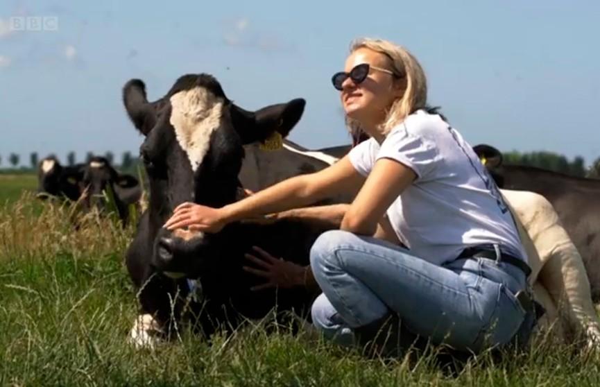 Коровы помогут в борьбе со стрессом: новый способ улучшить настроение придумали в Нидерландах