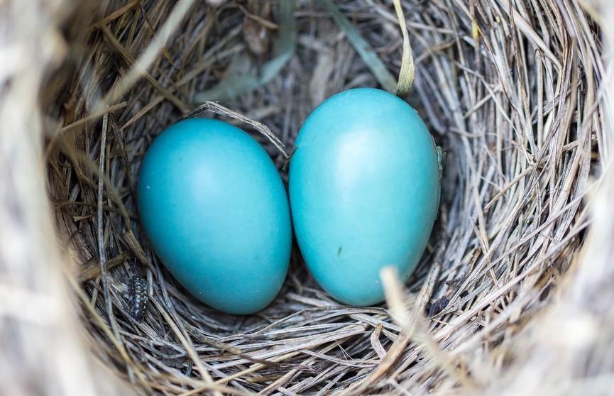 «Чьи яйца?». Находка под ванной напугала хозяев дома, но развязка оказалась неожиданной!