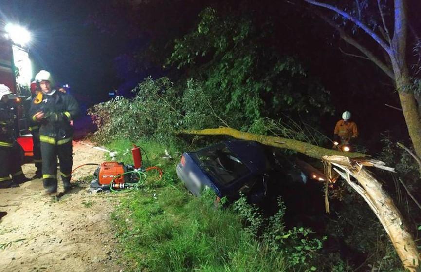 ДТП под Жабинкой: автомобиль врезался в дерево, погиб пассажир