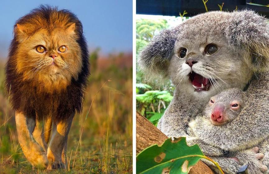 Как выглядели бы животные, будь у них мордашки котов. Милее за день вы ничего не увидите!