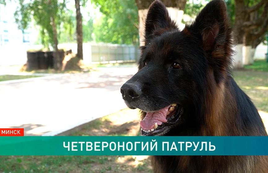Можно ли обмануть служебную собаку? Эксперимент ОНТ накануне II Европейских игр