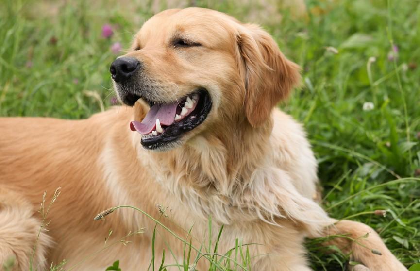 Коварный пес: чтобы победить соперника, собака опрокинула ворота (ВИДЕО)