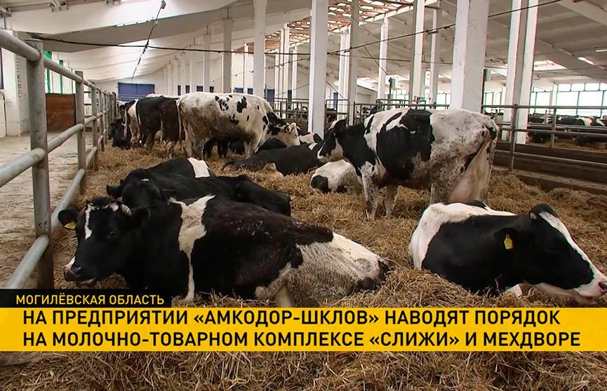Громкое эхо рабочей поездки Президента в Могилёвскую область. Как на ферме «Слижи» наводят порядок?