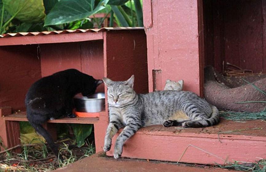 Кошачий заповедник – главная достопримечательностью острова Ланаи