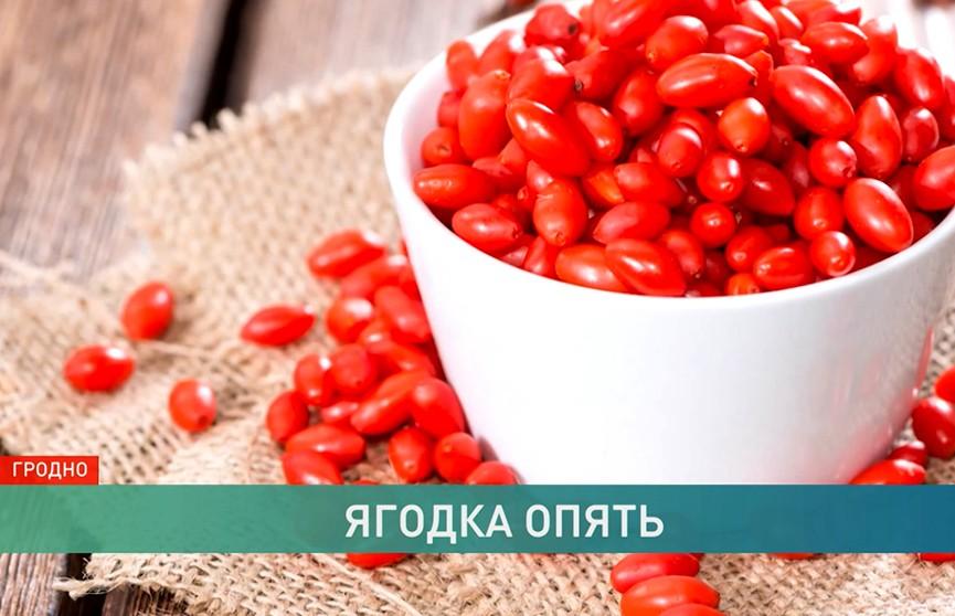 Ягоды годжи теперь выращивают в Беларуси. Правда ли, что они помогают быстро похудеть?