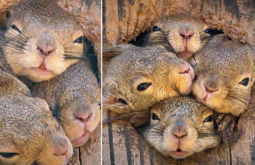 Четверо в одном дупле: японский фотограф снял смешную историю белок